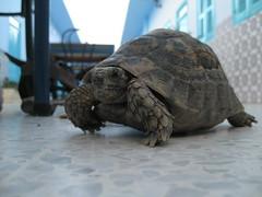 2011-01-tunesie-148-sbeitla-hotel de la jeunesse