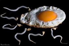 Dia de la madre (1 parte) (Popewan) Tags: gym huevofrito diadelamadre espermatozoides ovulos popewan