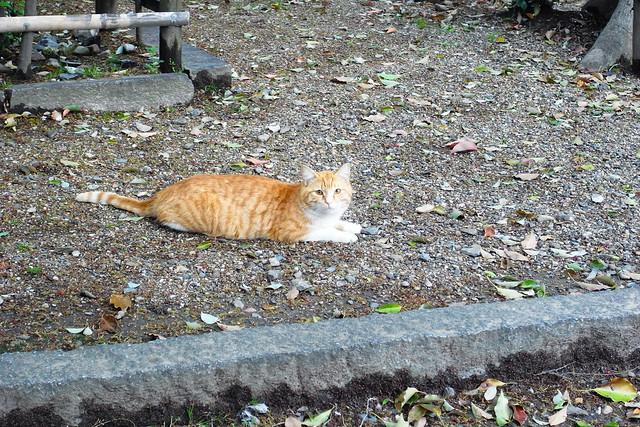 Today's Cat@2011-04-26