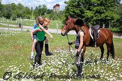 Horse Buddies (GilbankProductions) Tags: horses horse farm riding horseback horsebackriding horseshows morgans girlriding farmhorses