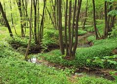 Mixed forest (alder, hornbeam, acorn, oak) - A...