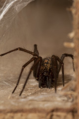 """House Spider(1) • <a style=""""font-size:0.8em;"""" href=""""http://www.flickr.com/photos/57024565@N00/5665349707/"""" target=""""_blank"""">View on Flickr</a>"""