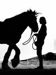 Before the show (BelePhotography) Tags: horse monochrome silhouette blackwhite backlit shirehorse artfilter olympuse5 seebw