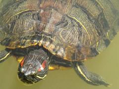 Park school pond karma karen tags texture maryland turtles ponds