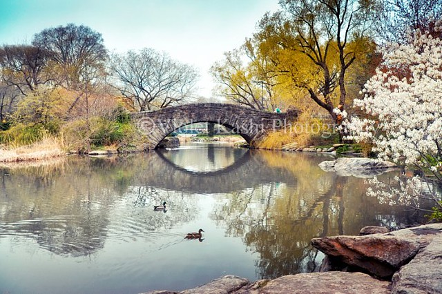 Central Park (series of photos)