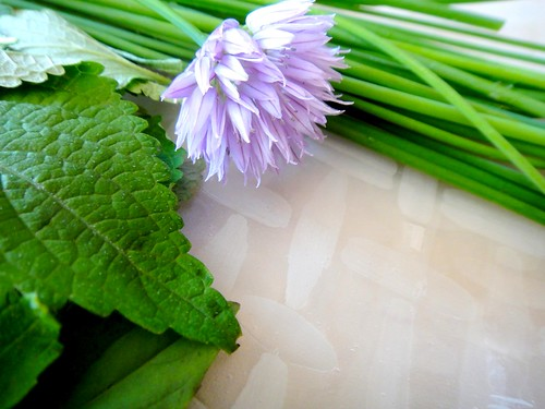 Herbs and rice paper