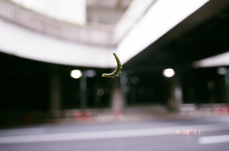 caterpillar_05