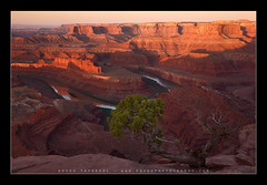 Canyon Country (Koveh Photography) Tags: park travel light sunset vacation horse usa mountains southwest tree water beauty digital photoshop sunrise canon river point dead eos utah spring ut colorado rocks glow photographer desert state branches tripod country may denver canyon clear filter canyonlands moab lasalle geology polarizer lb juniper warming lightroom ballhead 1635 goosenecks deadhorsepointstatepark landscapephotography nohdr singhray ef1635 photoclam 5dmkii kovehphotography koveh feizol