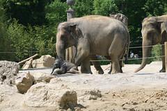 Elefantenmuter und Elefantenbaby