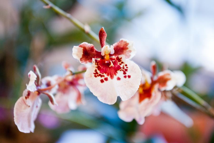 Чудесный цветок! Красивое боке! DSC_2892