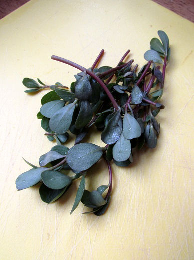 Purslane washed, rinsed and trimmed