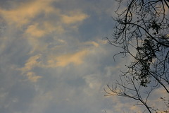 Sunset (prasanth_p_jose) Tags: campus iit mandi lowerhimalayas beautifulpictures beautifulcampus kamand shivalikranges kamandcampus iitmandikamandcampus amazingcampuspictures wildlifeiitmandikamandcampus