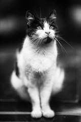 DSC00062 (Victor076) Tags: canon fd 8512 sony a7r bokeh chat noir et blanc