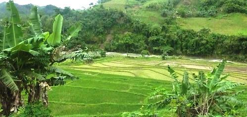 Negros -Bacolod-Savador-San Carlos (91)
