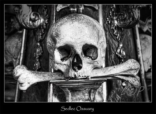 Skull @ Sedlec Ossuary