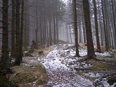 Przez las (magro_kr) Tags: las snow mountains nature fog forest poland polska natura góry śnieg gory mgla malopolska przyroda mgła małopolska beskidy beskidsadecki snieg małopolskie malopolskie beskidsądecki
