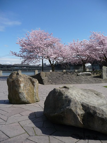 Waterfront Blossoms