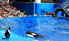 Katina (Shamufan88) Tags: orlando florida believe dolphins orca seaworld shamu killerwhale themeparks marinemammals