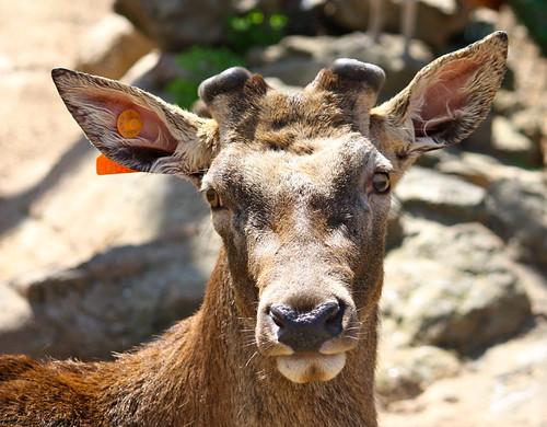 (Zoo de Barcelona)