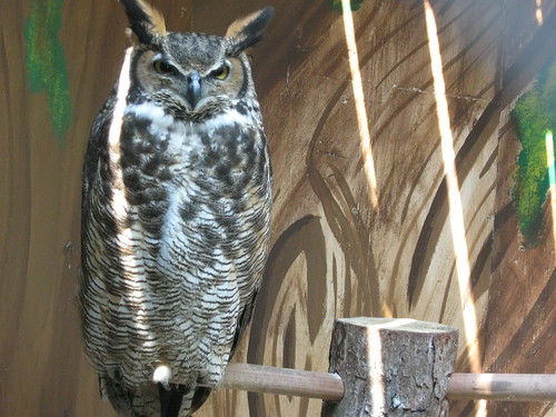 Mathilda Great Horned Owl