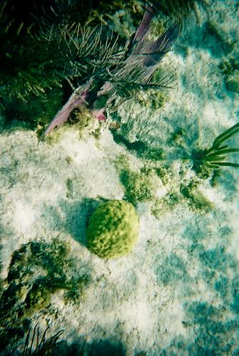 Coral Reef Sea Floor, John Pennekamp, Key Largo Florida