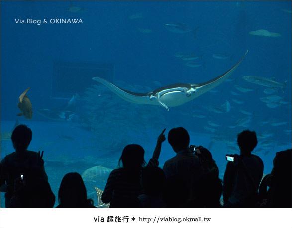 【沖繩景點】美麗海水族館~帶你欣賞美麗又浪漫的海底世界!29