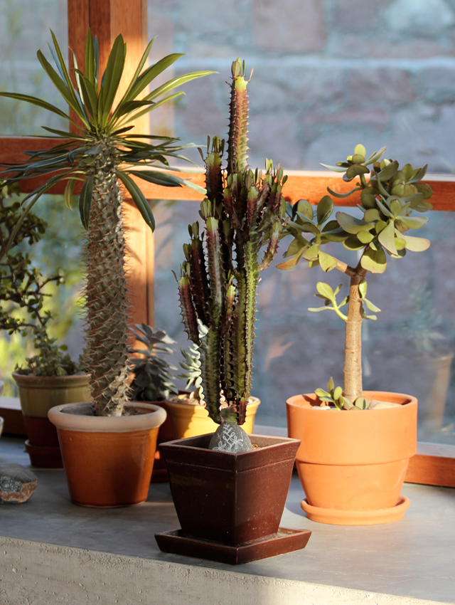 Euphorbia & Friends