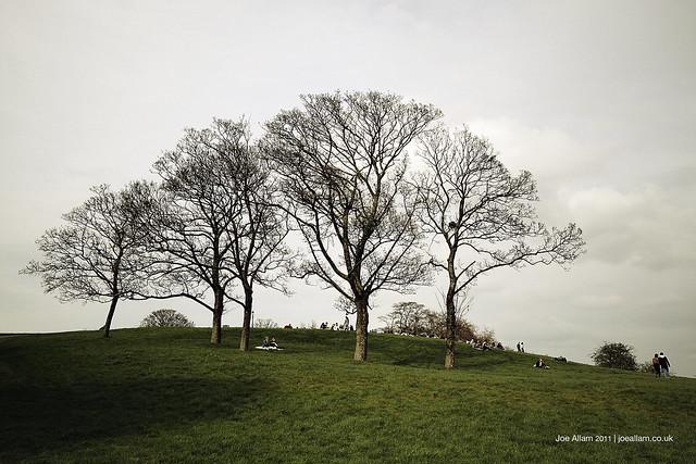 Primrose Hill Trees