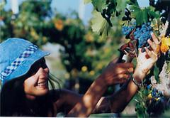 Catamarca: El vino y la Ruta del Adobe, protagonistas