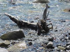 IMG_0500.JPG (RiChArD_66) Tags: kreidefelsen rgen strandkreidefelsenrgenstrand