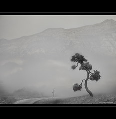 Rinpoche's Tree (h.koppdelaney) Tags: life mist art fog last digital photoshop peace view symbol path buddha religion picture monk buddhism philosophy zen harmony mind meditation teaching awareness metaphor enlightenment pilger stillness psyche symbolism psychology archetype pfad mnch conscious saariysqualitypictures koppdelaney