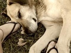 dog cute argentina animal