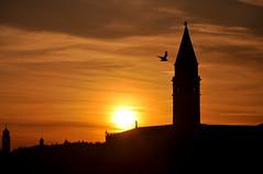 (Tazrian Khan) Tags: venice sunset italy bird tower nikon april 2011 d90 18105mmf3556