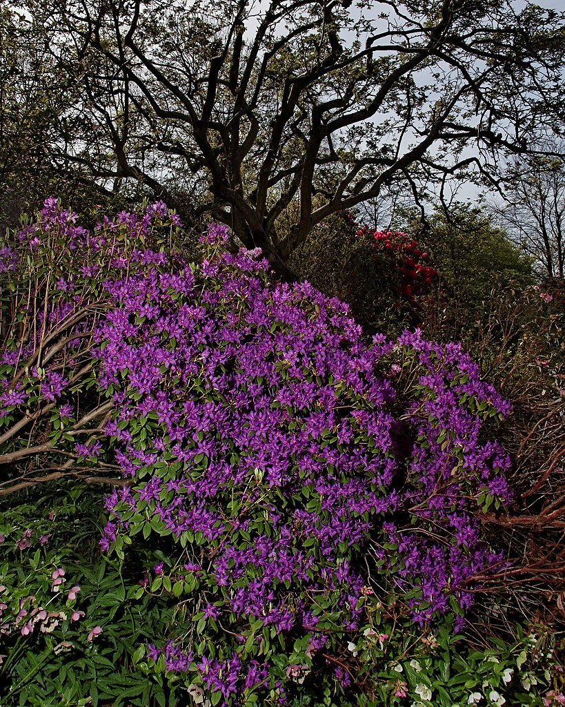 Some colour in the garden