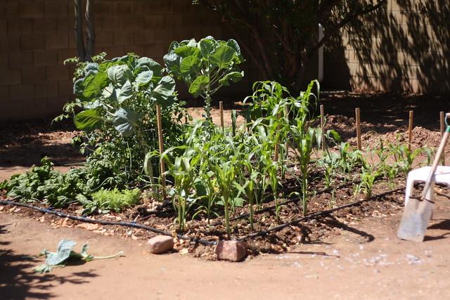Dad's garden (13)