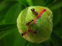 Hangyk bolygja / Planet of the ants (Bernadett Szalai) Tags: macro pecs animal canon geotagged hungary natural wow1 heartawards a480 blinkagain flickrstruereflection1