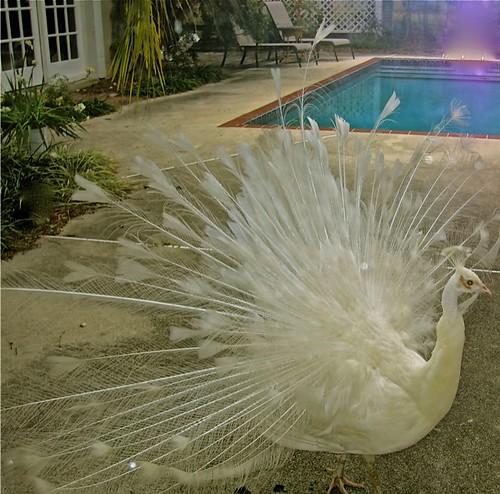 gary-scott-peacock