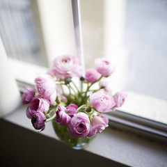 I am defenseless against pink ranunculus (Pink Scarf) Tags: flowers window ranunculus canon5d windowsill domesticlife pinkranunculus canon35mm14