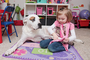 Sweet pit bull dog playing with a little girl