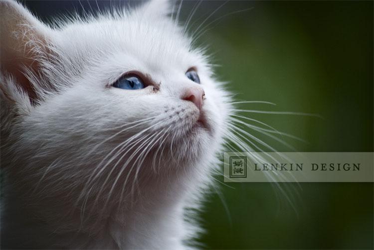 Lenkin-04.18.11-218