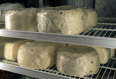 Sheep milk cheese
