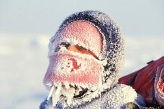 Frosty Max (Weber Arctic Expeditions) Tags: ice richard misha weber northpole frostbite arcticocean polarexpedition malakhov wardhuntisland fischerskis polarbridge polartraining capearkticheskiy dimitrishparo shparo