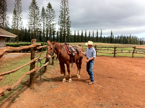 Jesse Taylor preps a horse at the Stables at Koele