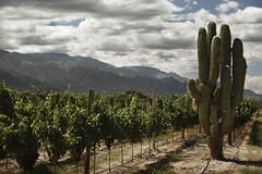 Conferencia sobre vinos salteños