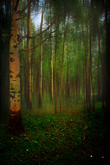 There's magic in the forest (JoLoLog) Tags: trees canada forest alberta lorien kananaskiscountry canonxsi motionblureffect highway546 bythebighorntrailviewpoint