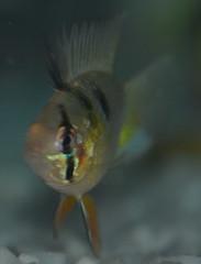 DS1_4730 (asifsherazi) Tags: pakistan nature beautiful beauty animals nikon fishes lahore natureplus d7000 asifsherazi