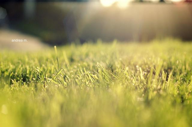grass flare