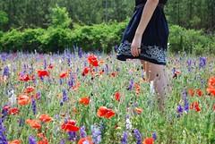 my favorite... (autumnsun08) Tags: favorite color daughter poppies breeze sooc cameracrop