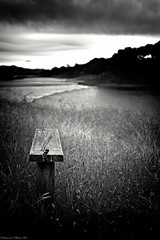 Chair of Nature (M.ALKHAMIS) Tags: leica malkhamis mohammadalkhamis