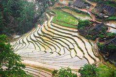 Curves (francois.sorrentino) Tags: vietnam sapa hmong rizières